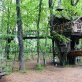 北軽井沢スウィートグラス キャンプ 家族 子連れ おしぎっぱの森 ツリーハウス ファミリーキャンプ